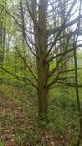 Простое безлистное дерево стоковое изображение rf