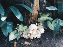 Простой гриб Стоковая Фотография RF