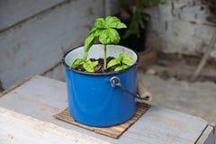 Простой способ иметь сад специи Стоковое Изображение RF