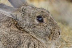 Простой удивленный кролик Стоковые Фотографии RF
