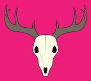 Простой череп ` s оленей Стоковое Фото
