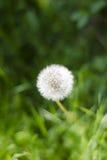 простота природы s стоковая фотография rf
