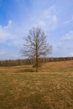 Просто дерево Стоковые Изображения