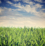 Просто зеленый луг Стоковое Фото