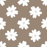Просто флористическая безшовная картина Повторенные белые цветки на коричневой предпосылке Стоковое Изображение