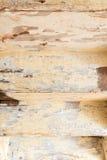 Проступи и рослост Подвергли действию деталь осмотренная от внизу Стоковая Фотография