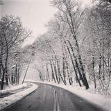 Простые снежные следы покрышки - портрет стоковая фотография rf