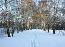 Простые снежные следы покрышки - портрет Стоковые Изображения