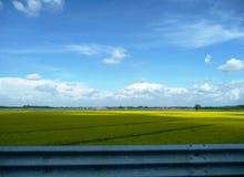 простый желтый цвет Стоковое фото RF