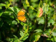 Простый момент природы с коричневой бабочкой Стоковое Изображение