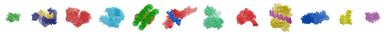 протеины иллюстрация вектора