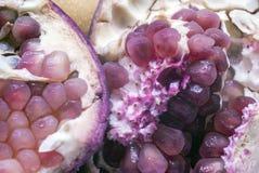 Противоокислительн фиолетовый плодоовощ гранатового дерева Стоковые Изображения RF