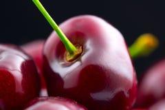 против белизны вишни предпосылки Органические зрелые вишни изолированные на черноте Стоковая Фотография