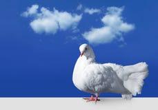 против белизны неба dove Стоковые Изображения