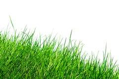 против белизны травы Стоковое фото RF