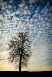 против вала захода солнца Стоковое фото RF