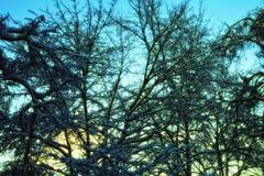 против валов неба льда вечера Стоковое Изображение RF