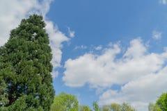 против вала голубого неба Стоковое Фото