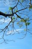 против вала неба Стоковые Фото