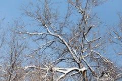 против голубого взгляда вала снежка неба крупного плана Стоковое Изображение RF