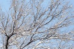 против голубого взгляда вала снежка неба крупного плана Стоковые Изображения RF