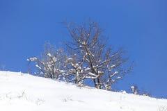 против голубого взгляда вала снежка неба крупного плана Стоковая Фотография RF