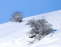 против голубого взгляда вала снежка неба крупного плана Стоковые Изображения