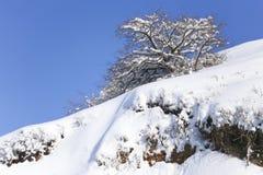 против голубого взгляда вала снежка неба крупного плана Стоковые Фото