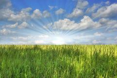 против голубого неба зеленого цвета травы Стоковое Изображение