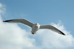 против голубого неба чайки Стоковые Фотографии RF