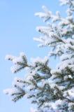 против голубого покрытого вала снежка неба Стоковая Фотография