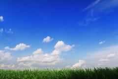 против голубой нашивки неба зеленого цвета травы богатой Стоковые Изображения RF