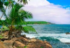 против голубого вала неба кокоса Стоковые Изображения