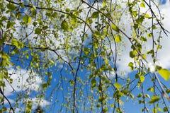 против голубого зеленого цвета выходит небо Стоковая Фотография