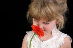 против девушки цветка 4 backg года красивейшей черной старого Стоковые Изображения