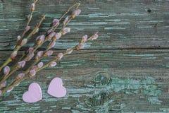 против детенышей весны цветка принципиальной схемы предпосылки белых желтых Стоковые Изображения RF