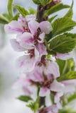 против детенышей весны цветка принципиальной схемы предпосылки белых желтых Стоковые Изображения