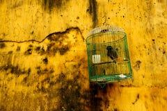 против желтого цвета вися стены клетки птицы стоковые изображения rf