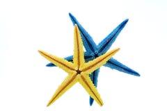 против желтого цвета голубых starfish предпосылки белого Стоковое Фото