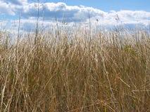 против желтого цвета неба травы Стоковые Изображения RF