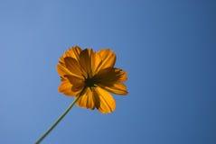 против желтого цвета wildflower голубого неба стоковые изображения