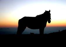 против захода солнца силуэта лошади Стоковое Изображение