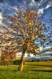 против красивейшего дуя ветра вала стоковые фотографии rf