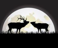 против луны оленей Стоковое Изображение RF