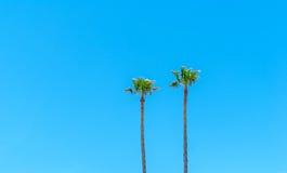 против неба ладони голубого океана острова fijian Тихого океан принятого валы 2 Стоковые Изображения RF