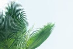 против неба ладони листьев Стоковая Фотография RF
