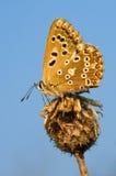 против неба бабочки Стоковая Фотография RF