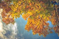против неба листьев Стоковая Фотография RF
