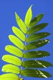 против неба листьев Стоковые Изображения