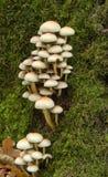 против осенних грибков пука предпосылки мшистых Стоковая Фотография RF
